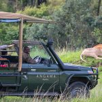 Angama Safari in Action - Legatto Lifestyle