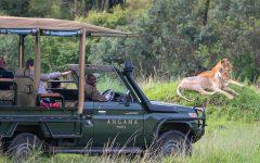 Angama Safari in Action - Legatto Lifestyle